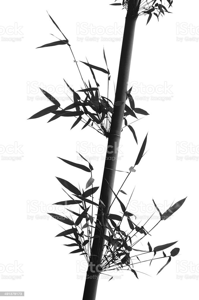Bamboo twig isolated stock photo