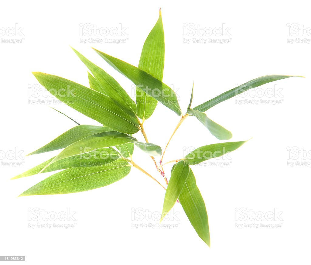Bamboo Twigs and Leaves stock photo