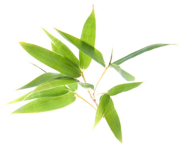Bambus Twigs'und Blätter