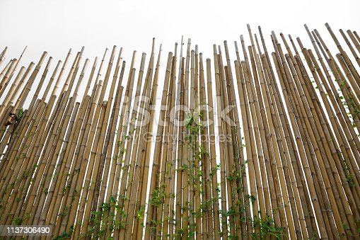 Bamboo wall in the park.