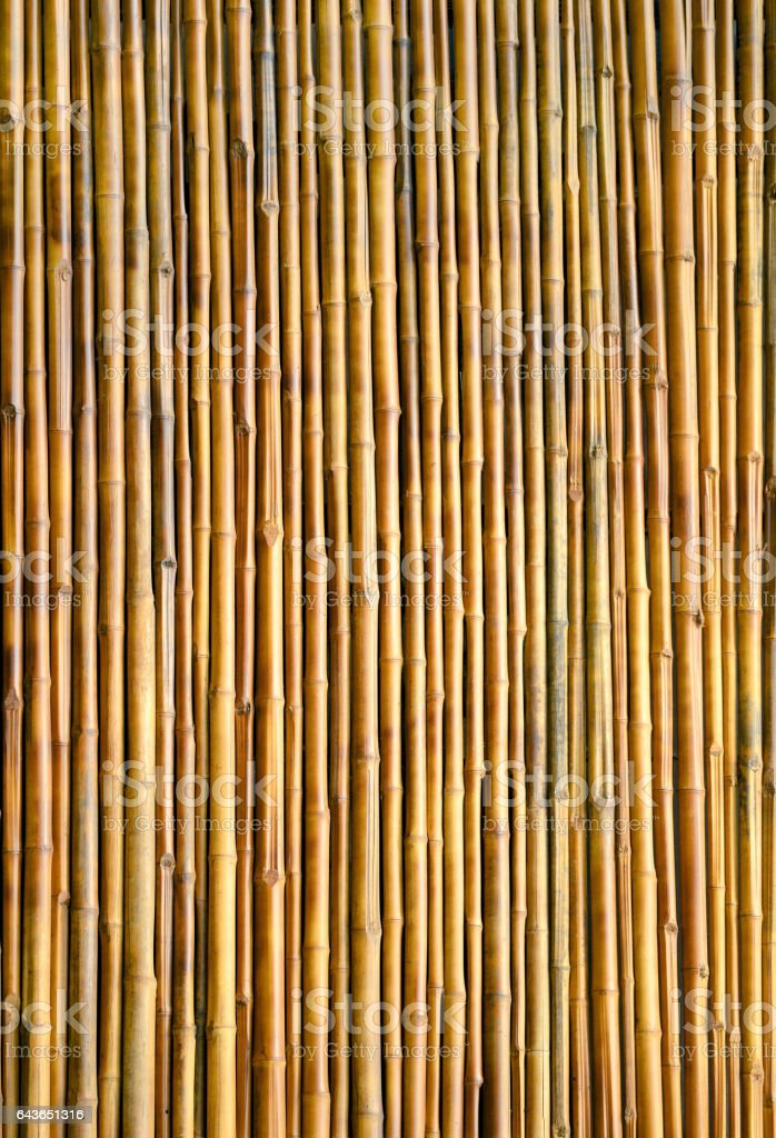 bamboo wall texture background stock photo