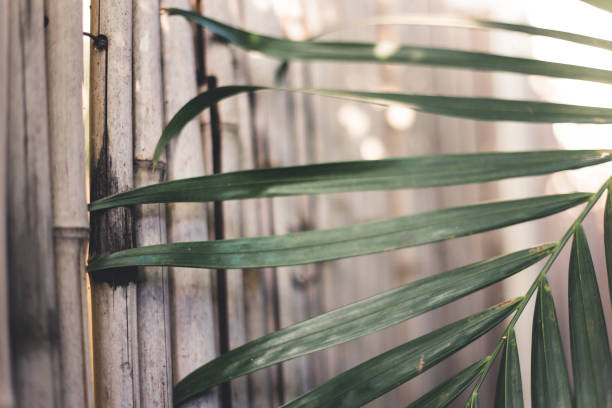 Bamboo wall with a palm leaf stock photo
