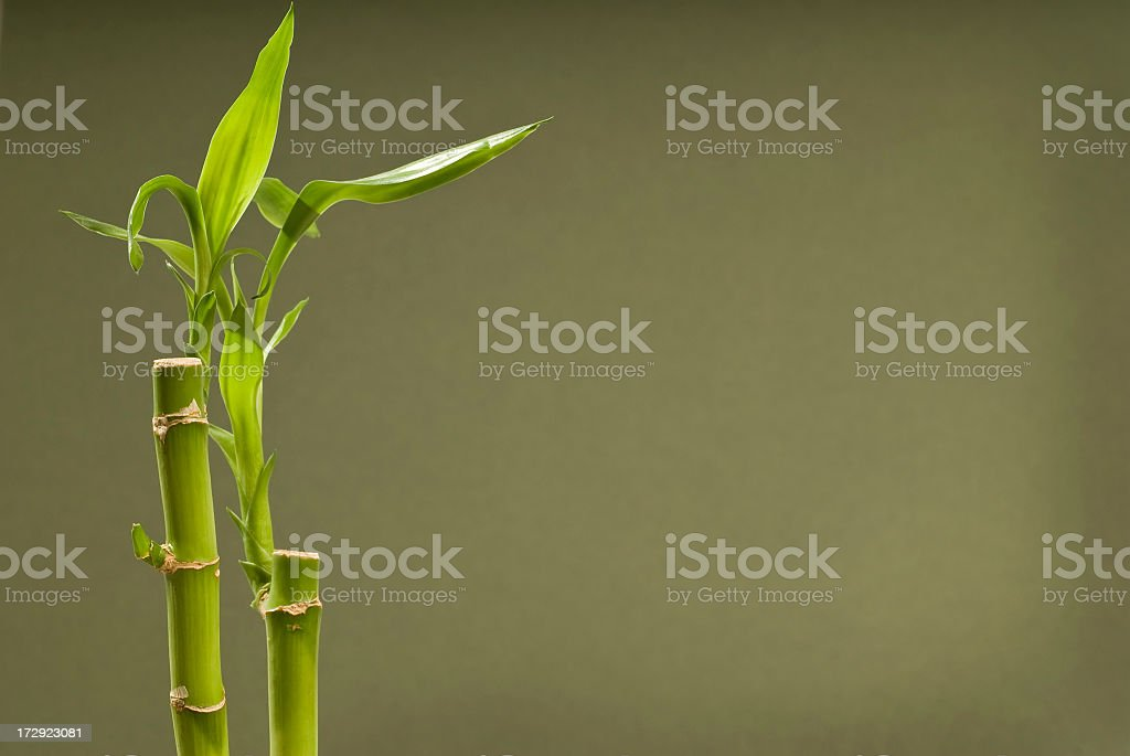 Bamboo With Dark Green Background royalty-free stock photo