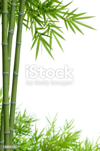 bamboo with leaves on white background with copy space
