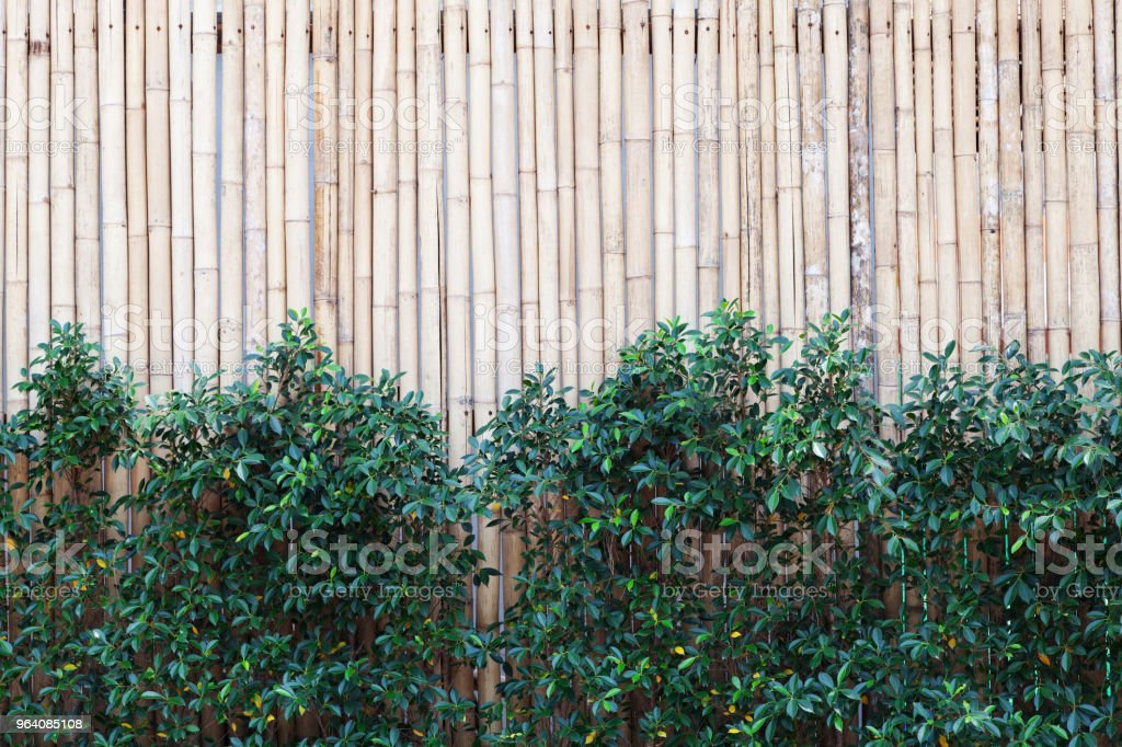 Bamboo wood fence texture pattern background with green leaves frame. - Royalty-free Abstract Stock Photo