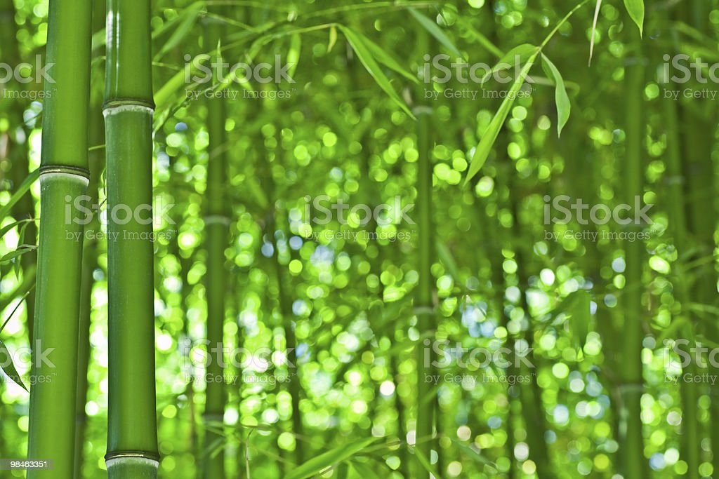 Bamboo zen royalty-free stock photo