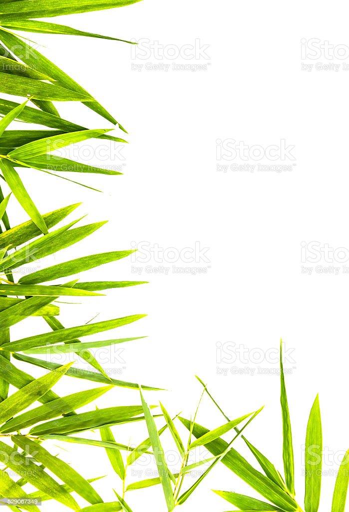 Bambus-Blätter isoliert. – Foto