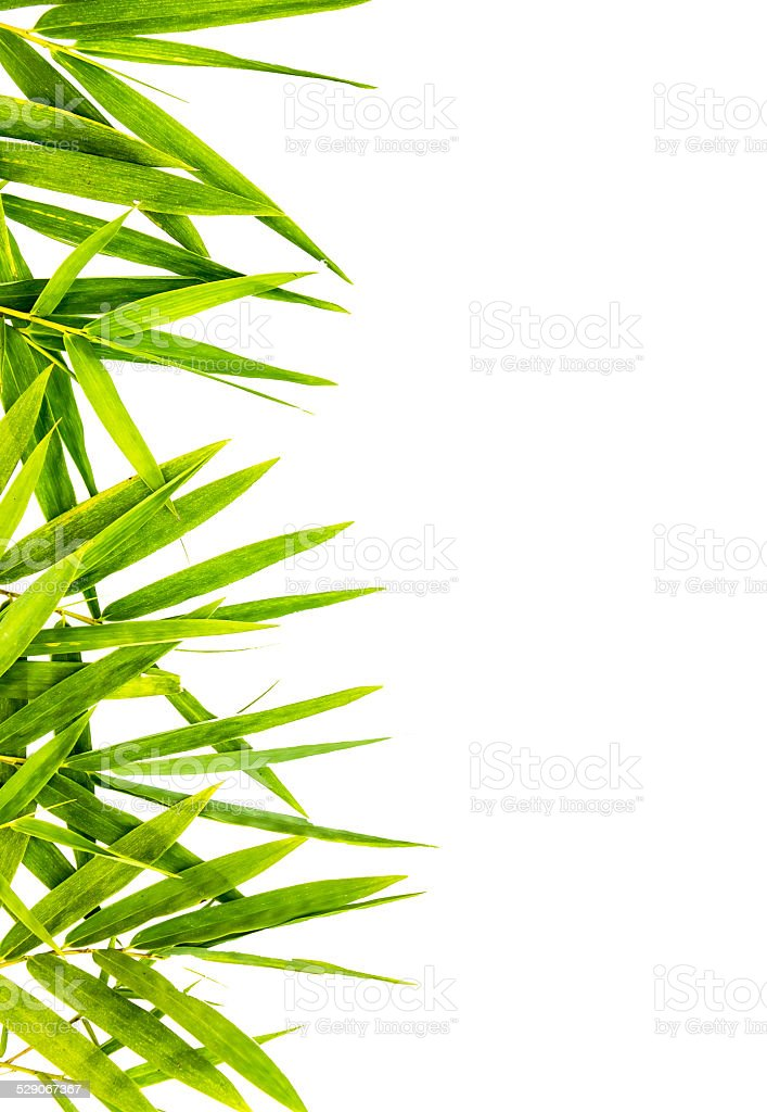 bamboo-leaves isolated . stock photo
