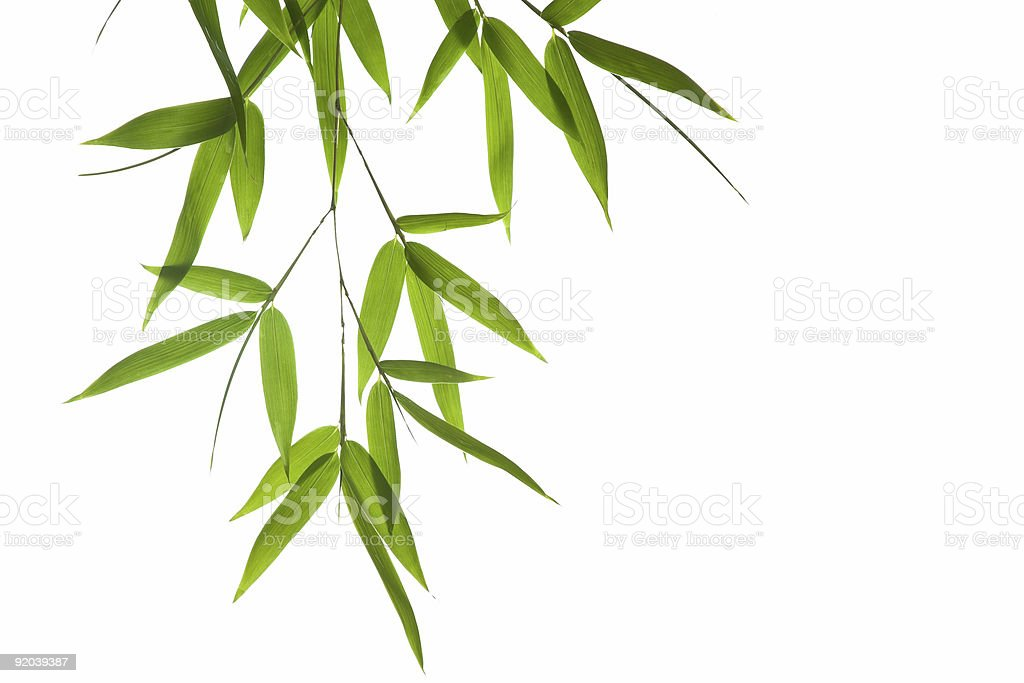 bamboo-leaves stock photo
