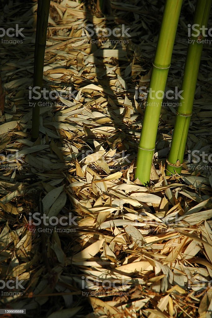 Bamboos Stock Photo More Pictures Of Absence Istock