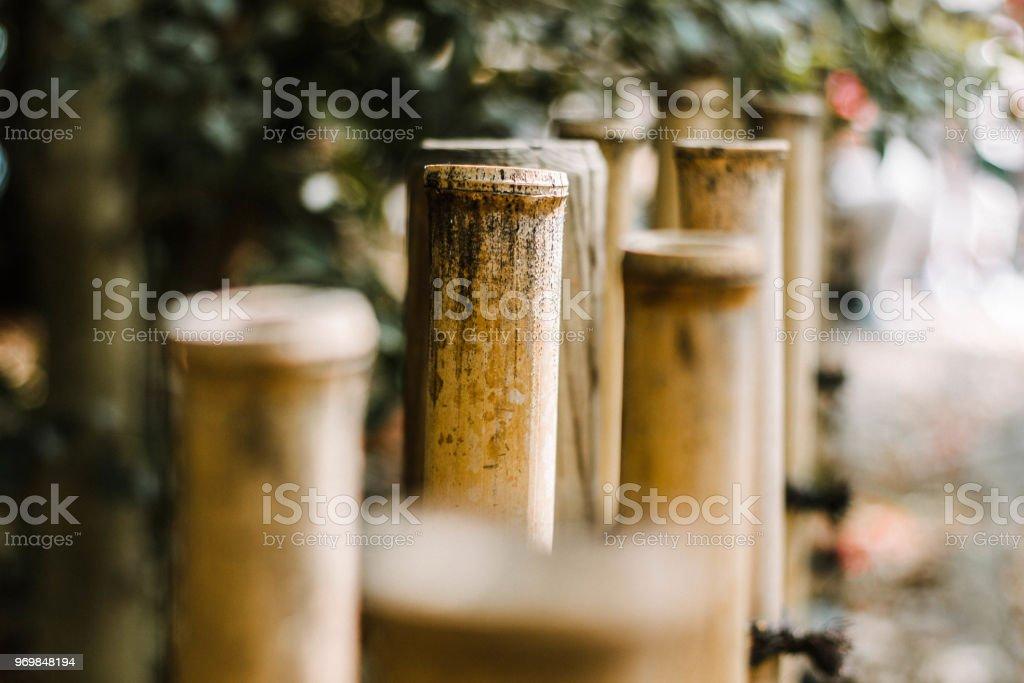 Bambús - foto de stock