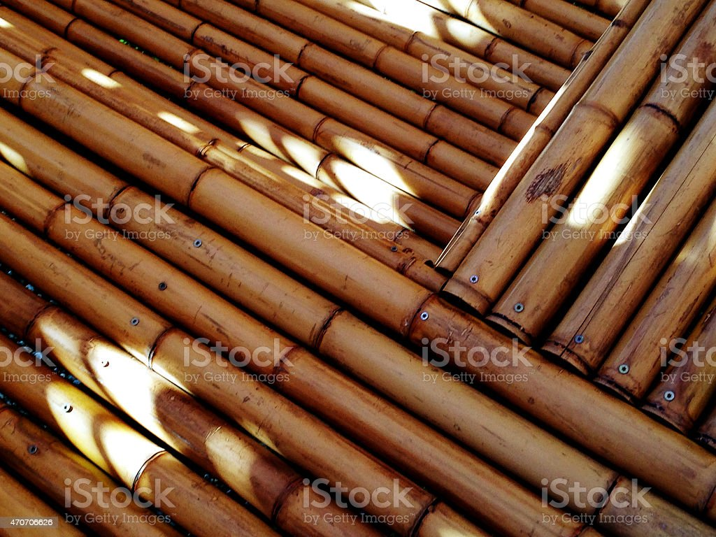 Bambus stock photo