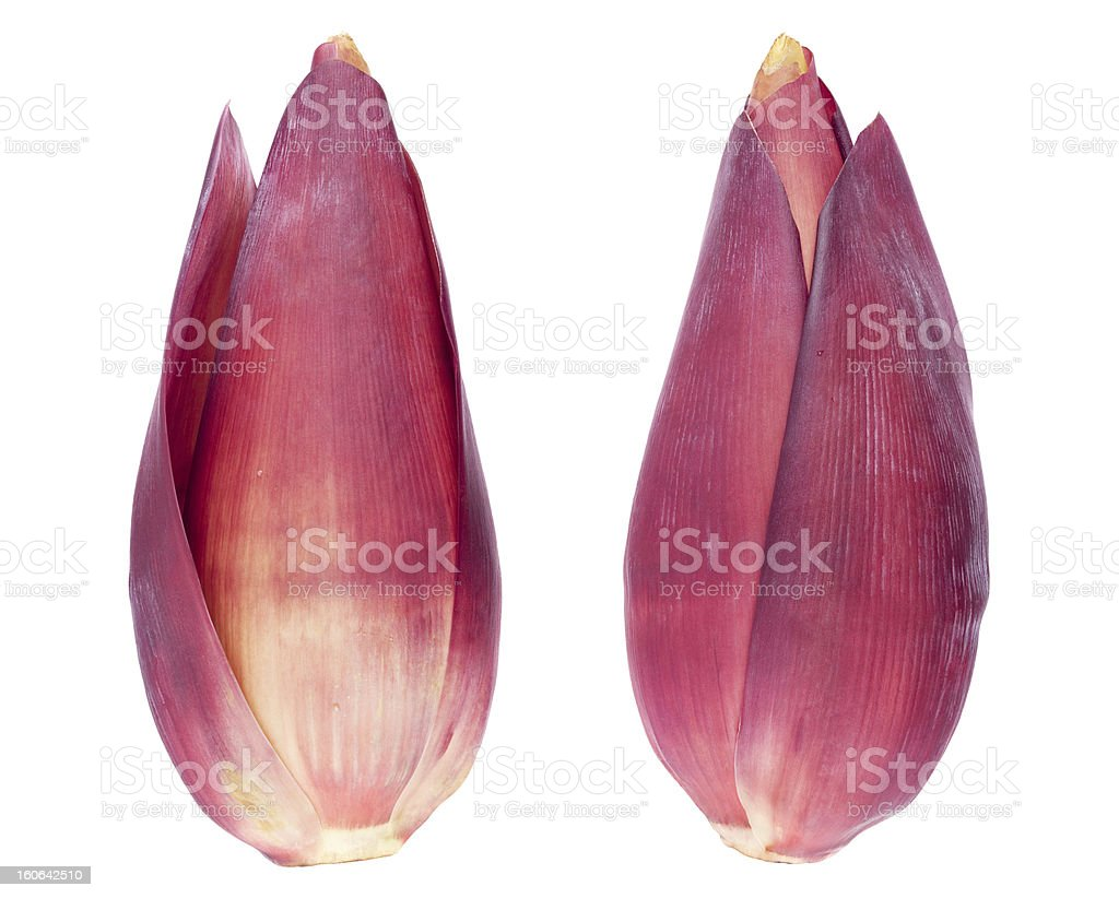 Banana blossoms royalty-free stock photo