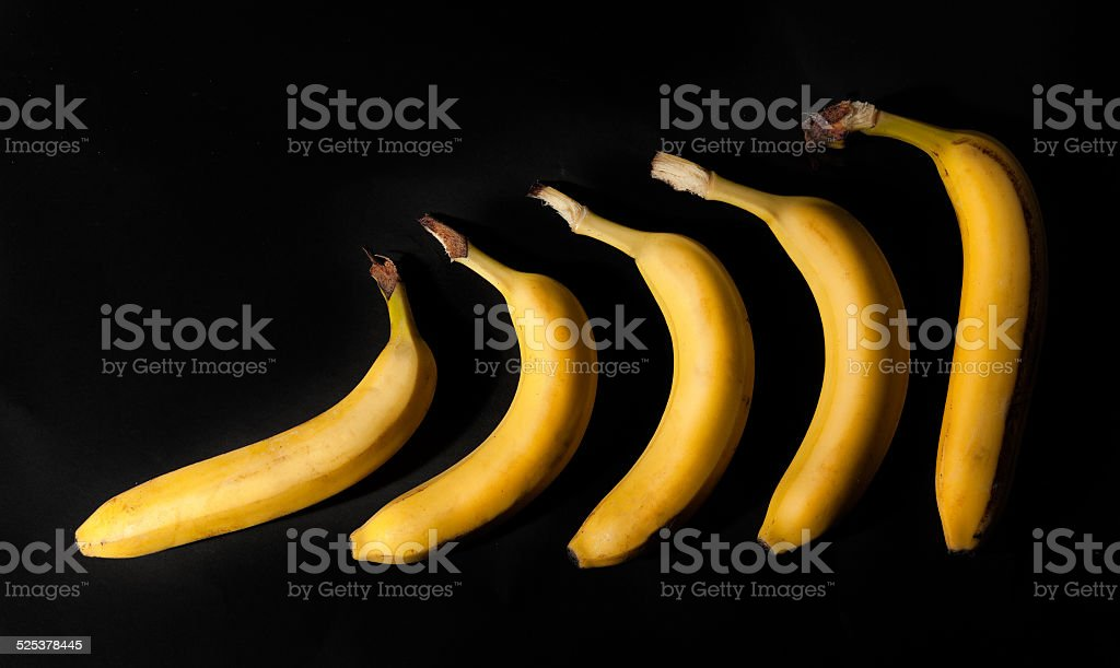 banana evolution stock photo