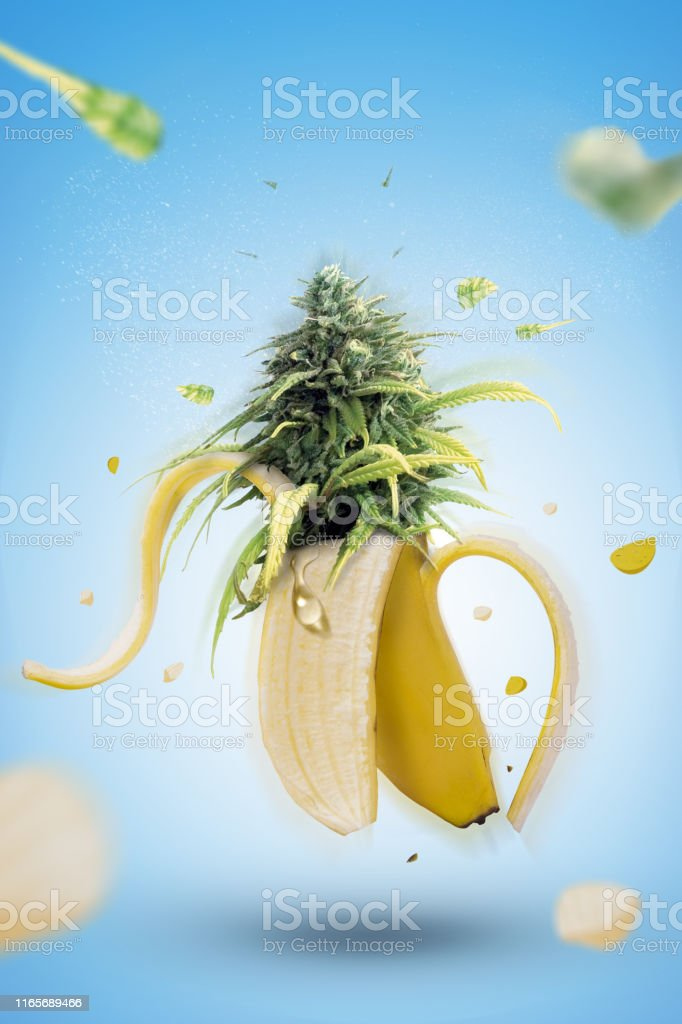 Banana fruit explosion with marijuana Banana fruit explosion with marijuana Addiction Stock Photo