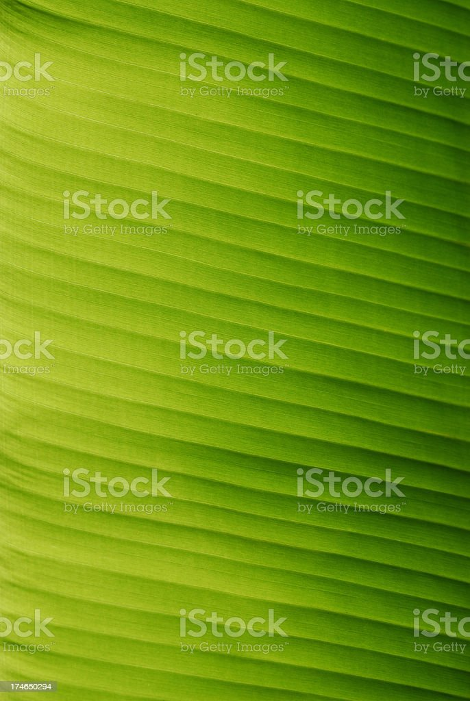 Banana Leaf Abstract stock photo