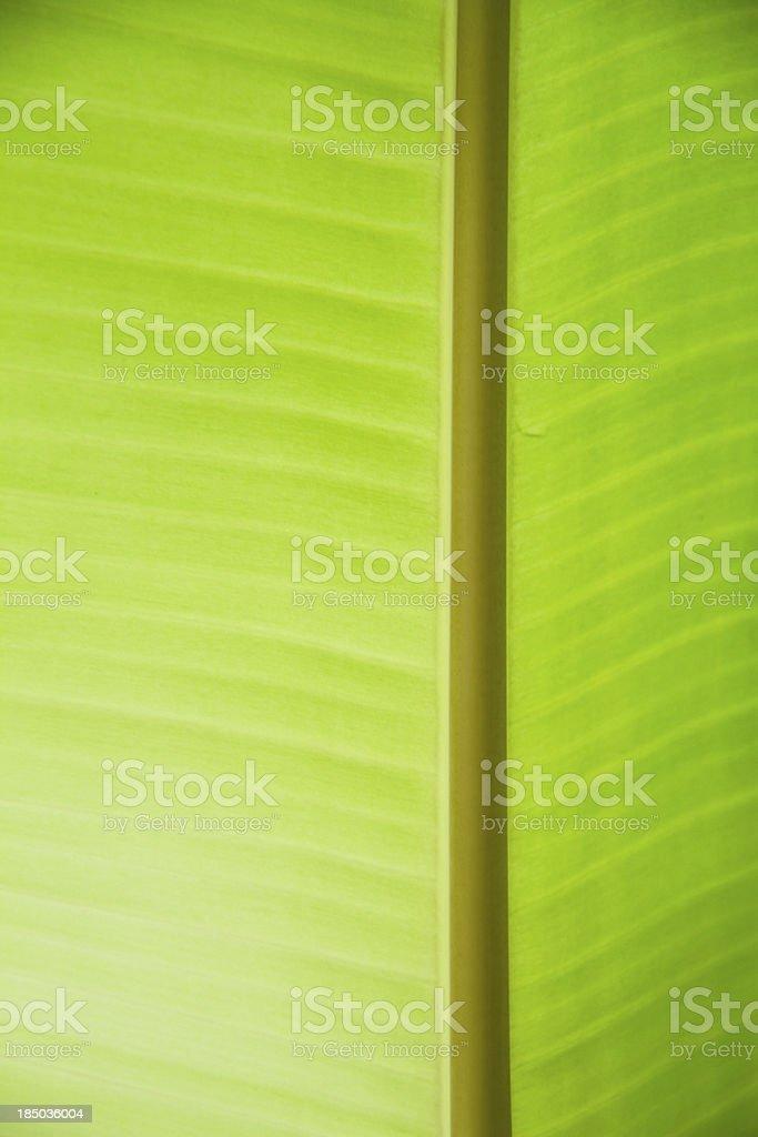 banana leaf background royalty-free stock photo