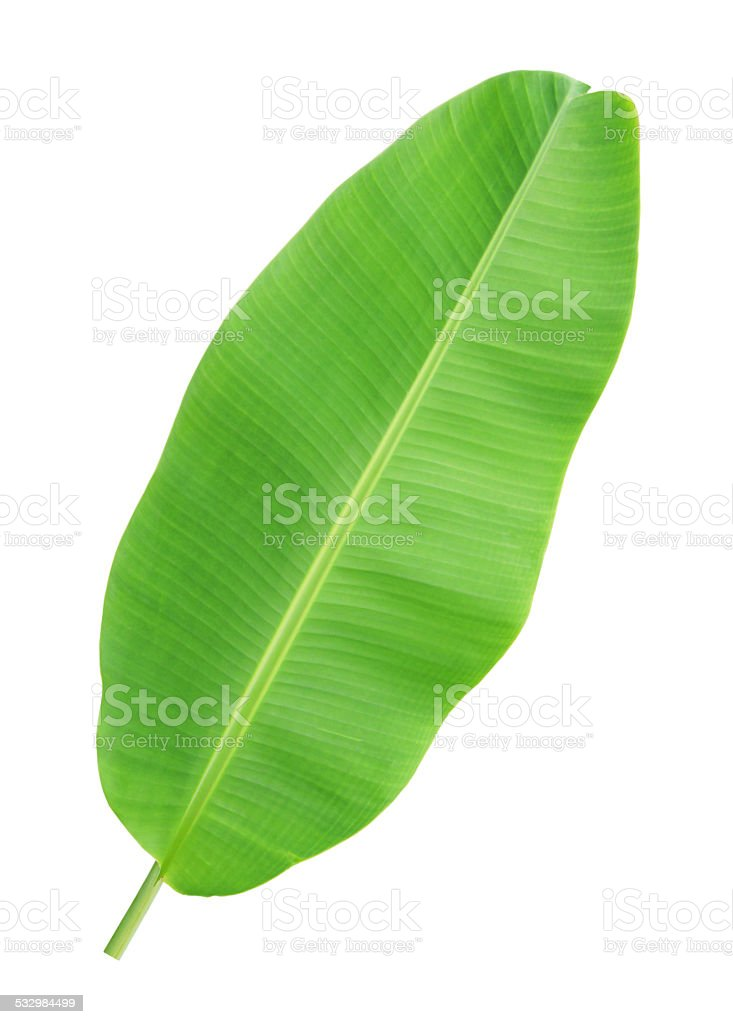 Banana leaf isolated on white background​​​ foto