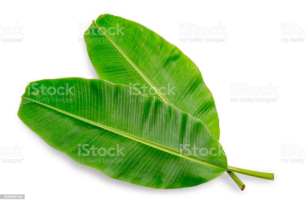 Banana leaf isolated on white background stock photo