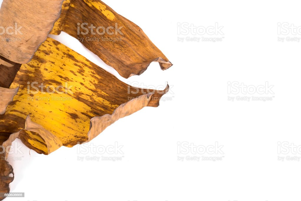 banana leaf royalty-free stock photo
