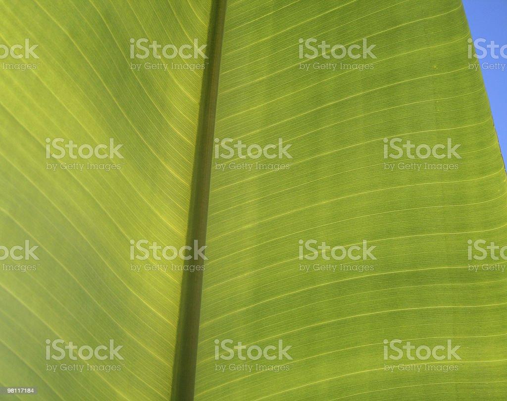 Foglia di banana foto stock royalty-free
