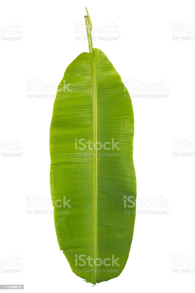 Banana leaf with clipping path isolated on white royalty-free stock photo