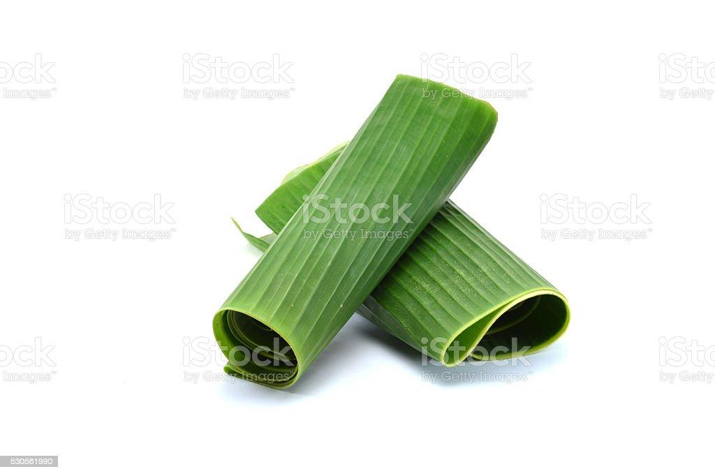 Banana leaves isolated on white stock photo