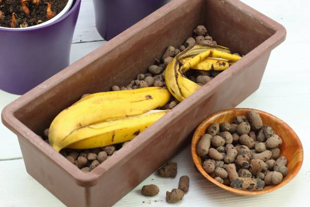 Banana peel good for plant fertilization Eco friendly natural way how to manure plants and flowers indoor, white table banana peel stock pictures, royalty-free photos & images