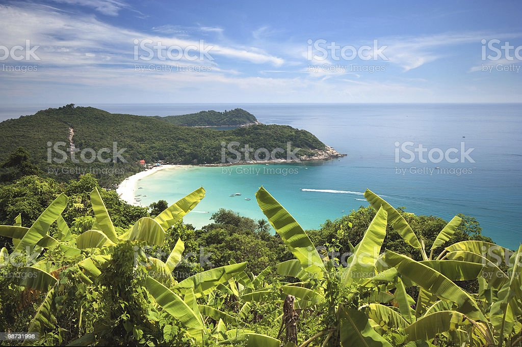 Banana plant field on a hill of a tropical island royalty-free stock photo