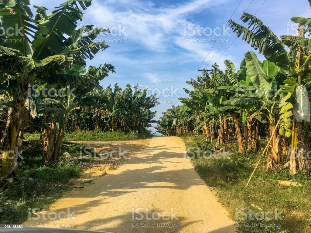 Bananen-Plantage Bauernhof in Vale Ribeira, Bundesstaat São Paulo, Brasilien – Foto
