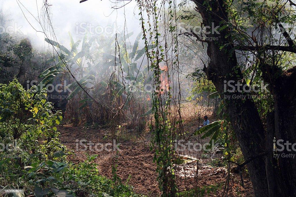 Banana Plantation on Fire, Thailand royalty-free stock photo
