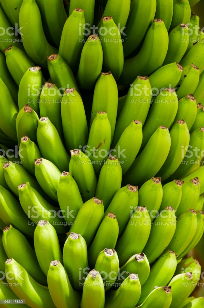 Banana plantation Tenerife, Canary Islands zbiór zdjęć royalty-free