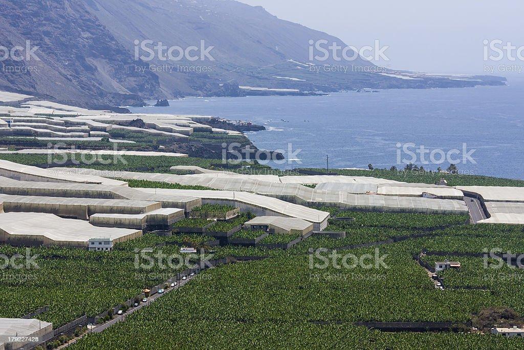 Banana plantations along the coast of La Palma stock photo