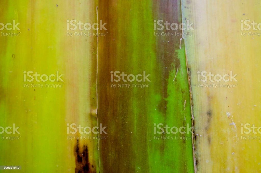바나나 나무 껍질 질감 - 로열티 프리 0명 스톡 사진