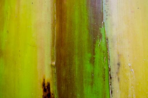 바나나 나무 껍질 질감 0명에 대한 스톡 사진 및 기타 이미지