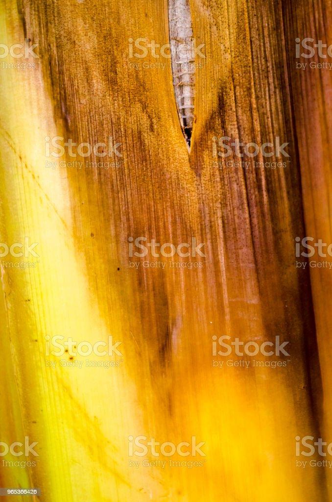 香蕉樹樹皮紋理 - 免版稅Monte Verde Cloud Forest圖庫照片