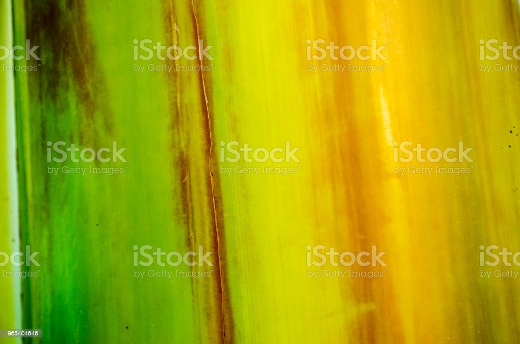 banana tree bark texture royalty-free stock photo