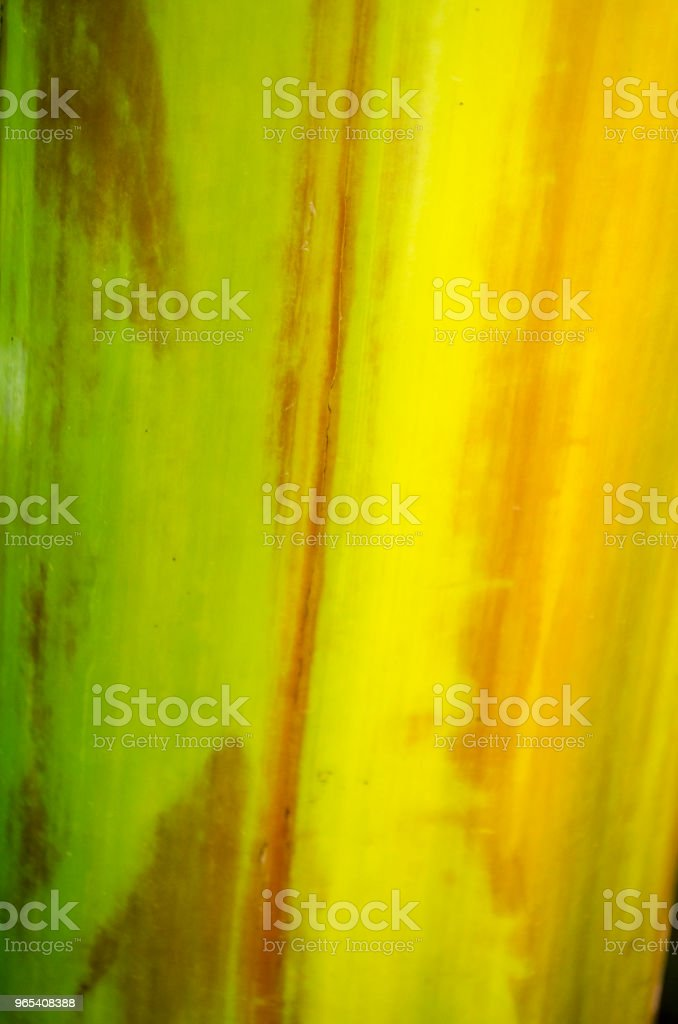 banana tree bark texture royalty-free stock photo