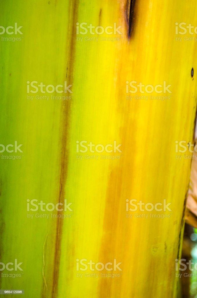 banana tree bark texture zbiór zdjęć royalty-free