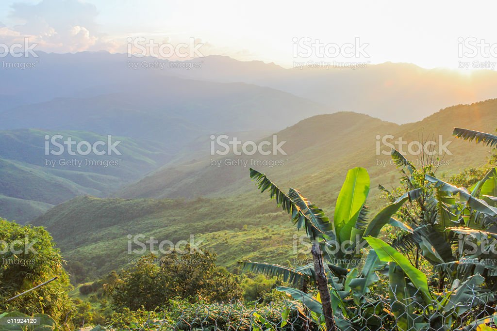 banana tree in colourful Mountain stock photo