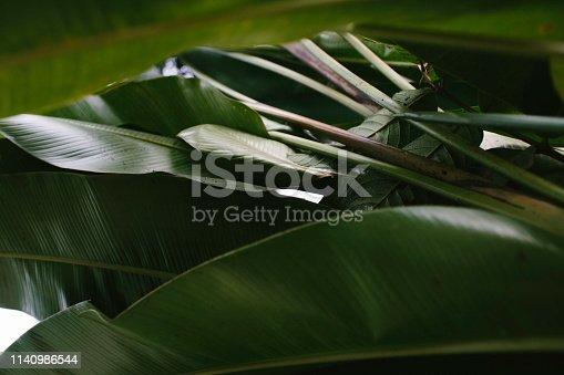 Banana, Condiment, Palm Leaf, Back Lit, Banana Tree