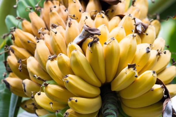 Bananen wachsen auf einem Baum – Foto
