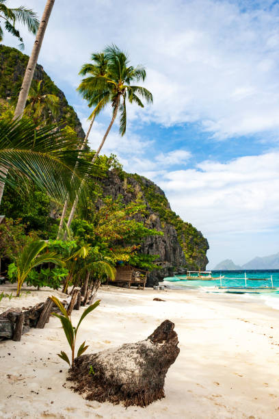 Banca boats on the pristine beach of Entalula island in El nido region of Palawan in the Philippines. Vertical view. stock photo