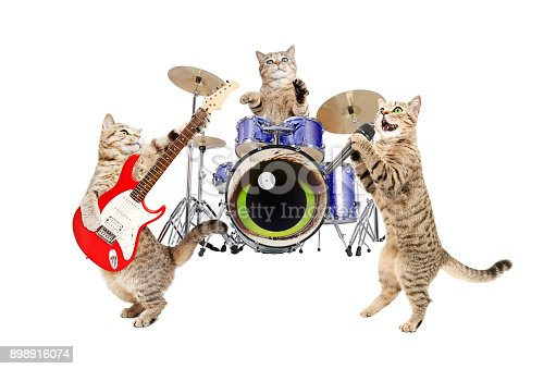 Band musicians cats Isolated on white background