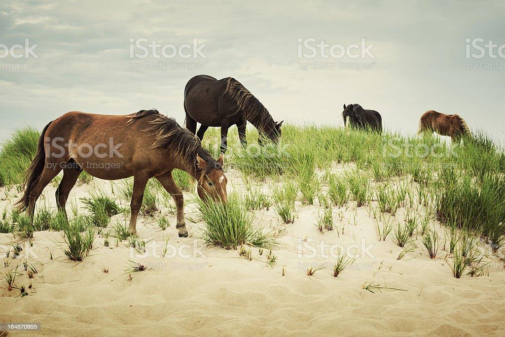 Band of Horses royalty-free stock photo