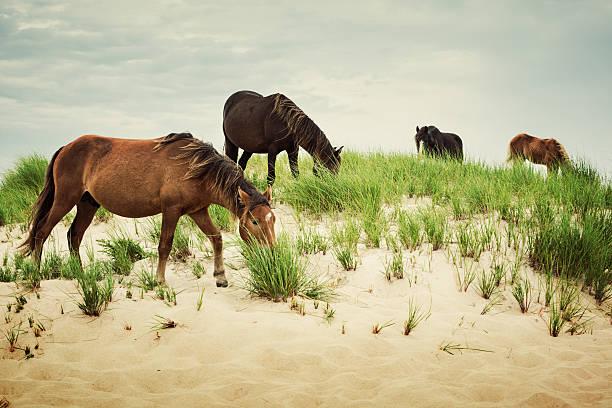 Band of Horses stock photo