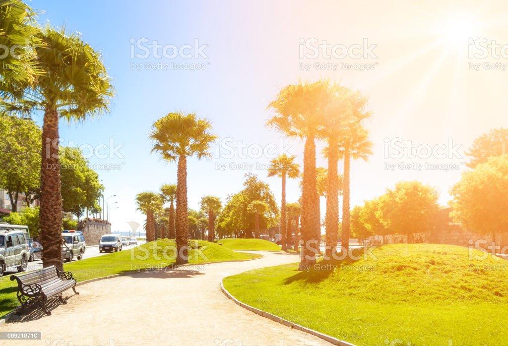 Bandejon with palms in Vina del Mar, Chile stock photo