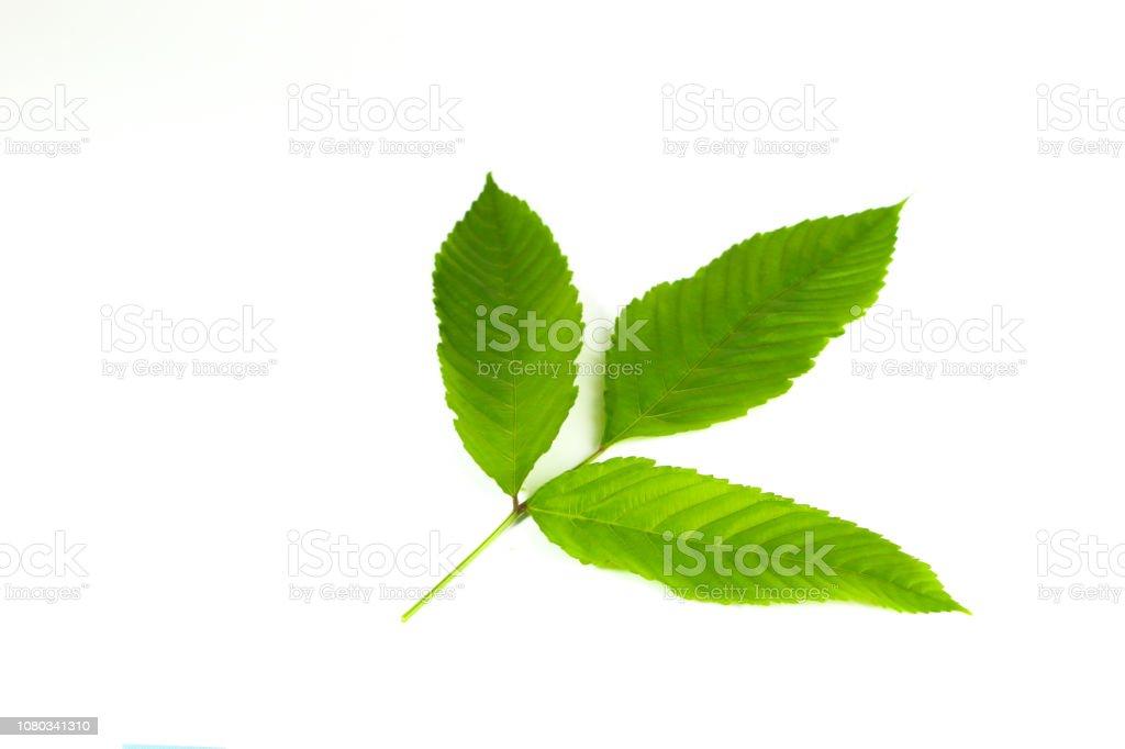 Bandicoot Berry Close up stock photo