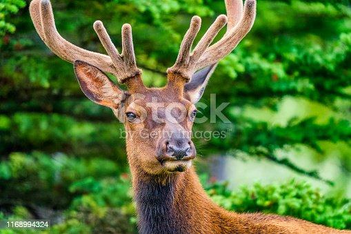 istock Banff National Park in Alberta Canada 1168994324