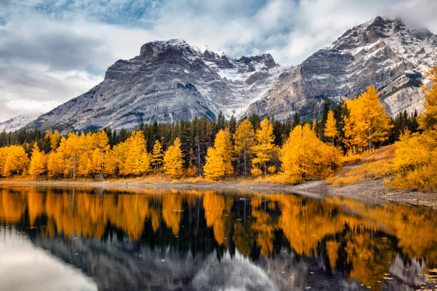 Banff National Park Lake with reflection of mountains and yellow trees at Kananaskis National Park, Canada. kananaskis country stock pictures, royalty-free photos & images